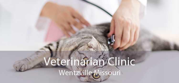 Veterinarian Clinic Wentzville Missouri
